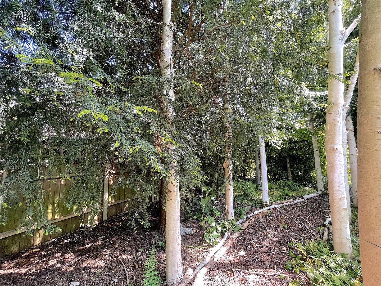 Garden (13).jpeg