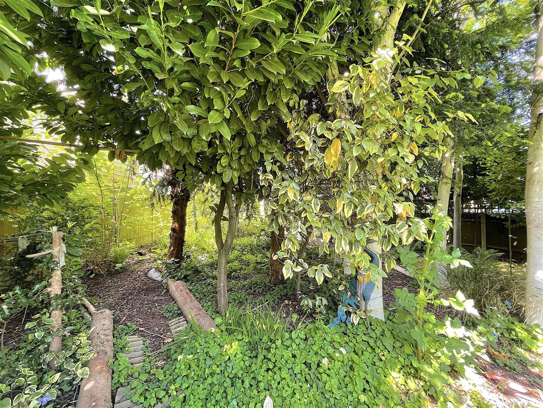 Garden (9).jpeg