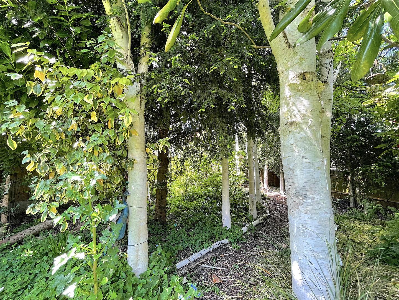 Garden (11).jpeg
